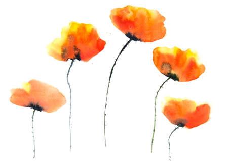 poppy flowers: Stylized poppy flowers, watercolor illustrator