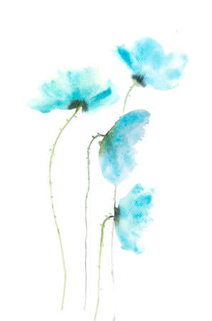 poppy flowers: Blue poppy flowers , watercolor painting on paper Stock Photo