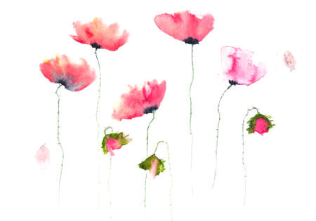 isolation backdrop: Beautiful poppy flowers watercolor painting