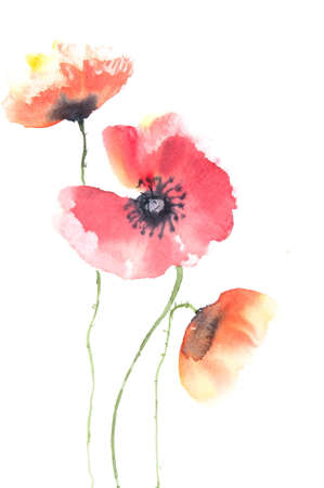Beautiful poppy flowers watercolor painting stock photo picture and beautiful poppy flowers watercolor painting stock photo 46907913 mightylinksfo