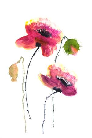 poppy flowers: Beautiful poppy flowers watercolor painting