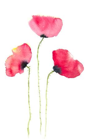 paiting: Red poppy flowers watercolor paiting
