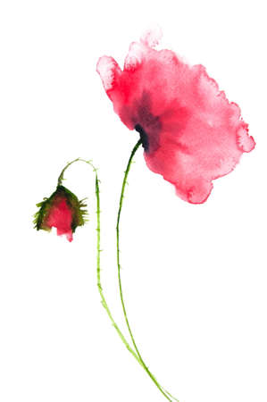 Beautiful red poppy flower watercolor painting stock photo picture beautiful red poppy flower watercolor painting stock photo 47850829 mightylinksfo