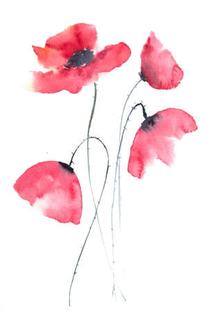 Beautiful red poppy flower, watercolor painting
