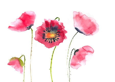 red poppy: Beautiful red poppy flower, watercolor painting