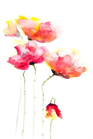 poppy flowers: Red poppy flowers Stock Photo