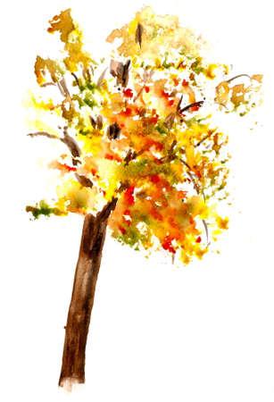 genealogical: Autumn tree on white Stock Photo