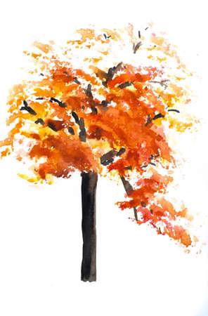 autumn tree: Autumn tree on white Stock Photo