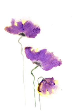 Purple poppy flower on white, watercolor painting in impressionism style Stock Photo