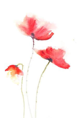 red poppy: Stylized red poppy , watercolor illustrator