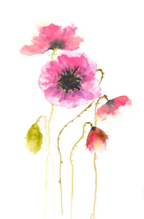 impression: Pink poppy flowers on white, watercolor illustrator