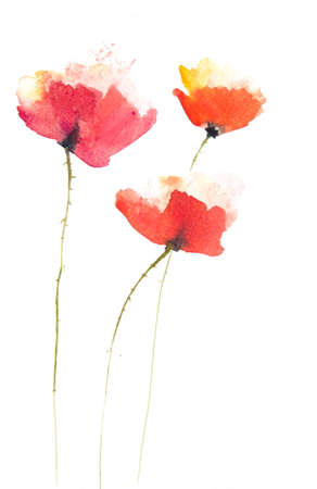Poppy flowers painting,watercolor painting