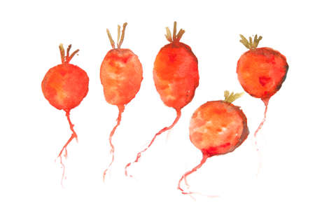 intact: Red radish art, watercolor vegetable still life painting Stock Photo