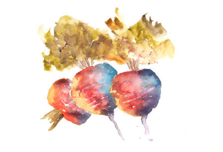 art painting: Beetroot art, watercolor vegetable still life painting