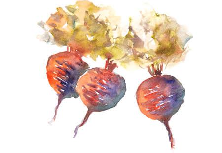 art painting: Beetroot art,watercolor vegetable painting