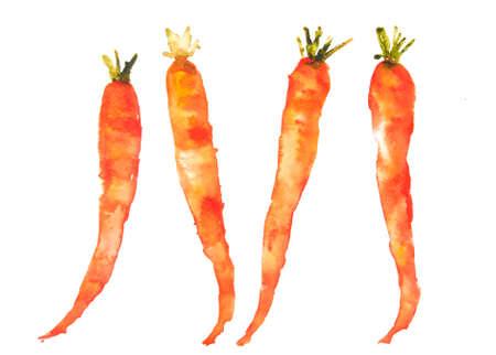 Four carrots on white, carrot art, watercolor illustrator