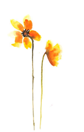 art painting: Yellow flowers on white, watercolor painting, flower art Stock Photo