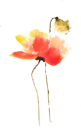 isolation: Red poppy