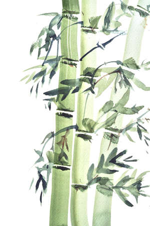 stark: Watercolor painting of bamboo