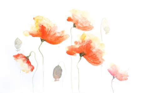 impression: Stylized poppy flowers painting on white
