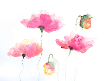painting and stylized: Stylized poppy flowers painting on white