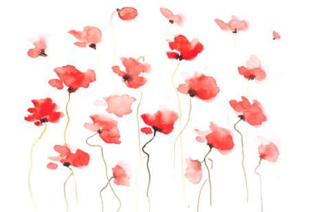 Red poppyt background
