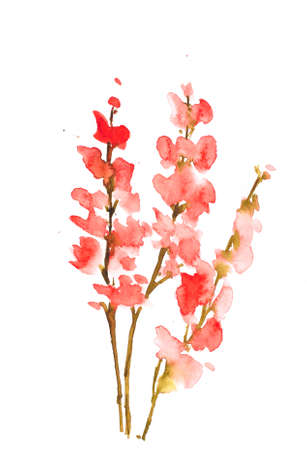 isolate: Red flowers Stock Photo
