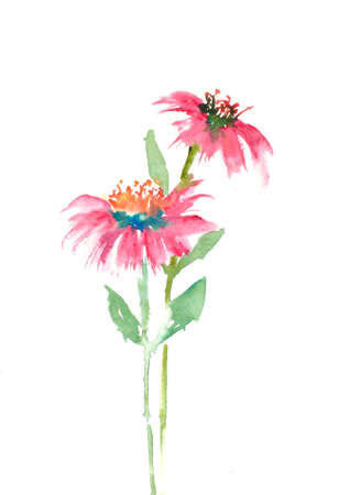 Beautiful wildflowers on white background, watercolor hand draw on paper