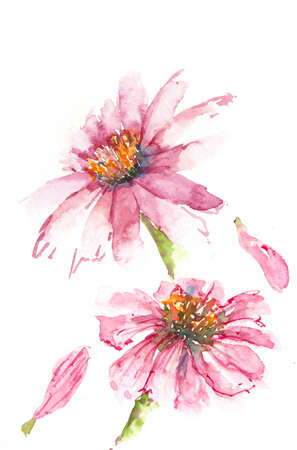 Pink zinnia flower, watercolor illustrator, floral art, home decorate Stock Photo