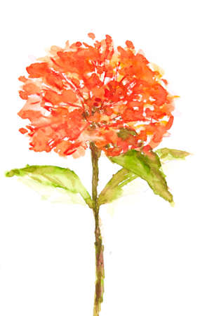 Red Ixora flower on white, floral art, watercolor illustrator, home decorate Stock Photo