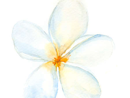White flower, watercolor painting, floral art, home decorate