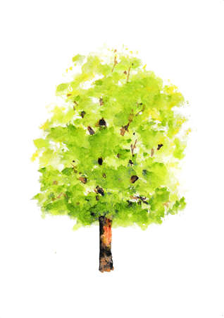 Green tree on white background, watercolor illustrator, hand painted Фото со стока - 105101825