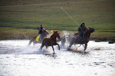 mongolia horse: Ergele men Editorial