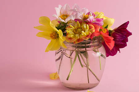 Flowers in a glass jar on a pink background. Interior. Imagens