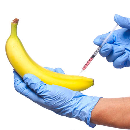 Injection into banana isolated on white background  Genetically modified fruit and syringe in his hands with blue gloves