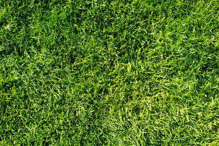 grass: field of fresh green grass texture as a background, top view, horizontal