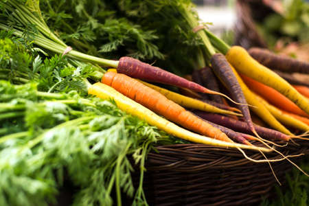 harvest: freshly harvested, colorful organic carrots in a basket at farmers market. selective focus, horizontal, close up. Stock Photo