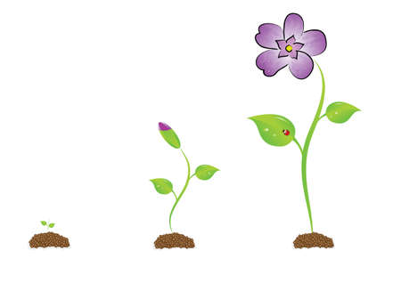 The isolated sprout with a violet.