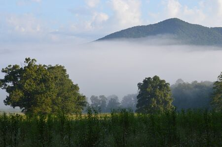 smokies: Early Morning Fog in Cades Cove, Great Smoky Mountains