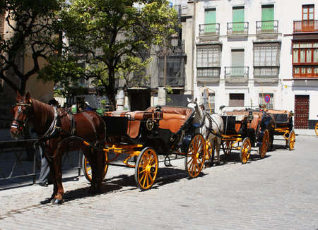 steed: horses and carriages for sightseeing in Seville, Spain