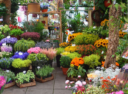 shops: variety of flowers at a flower market in Amsterdam, Holland