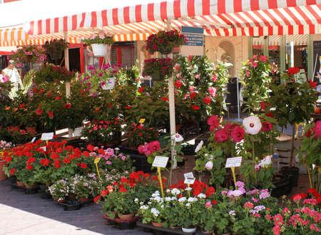 Flower market in old Nice, France