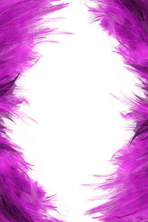 purple feather border and frame