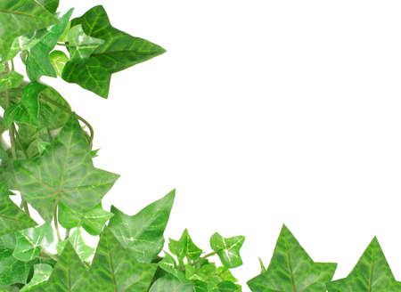 ivy wall: botanical, green border made of ivy leaves Stock Photo