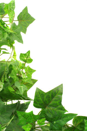 climbing frames: botanical, green border made of ivy leaves Stock Photo