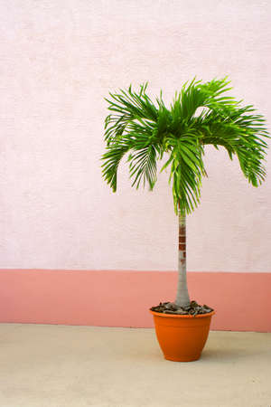 lone potted palm tree against a wall with  copyspace