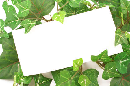 blank card on ivy plant background or border Stock Photo