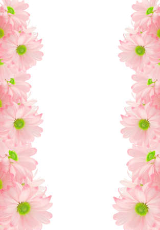 pink daisy: pink daisy background or border for greeting card