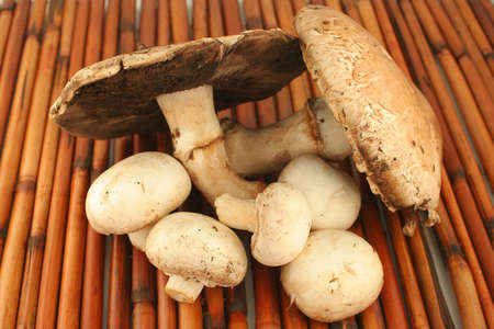 gills: big freshly picked portabello mushrooms and smaller button mushrooms ready for cooking Stock Photo