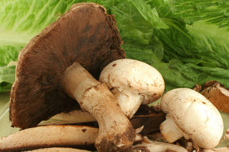 big freshly picked portabello mushrooms and smaller button mushrooms ready for cooking with a lettuce background photo